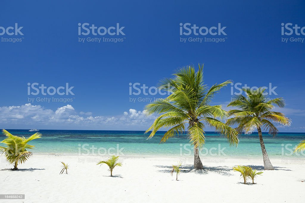 Tropical Palm Trees on Beach stock photo