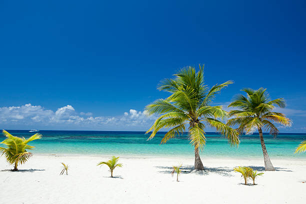Tropical Palm Trees on Beach  honduras stock pictures, royalty-free photos & images