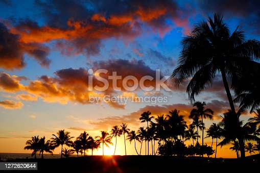 Tropical palm trees silhouette silhouetted by sunset of sunrise