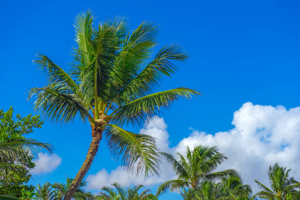 Tropical palm Trees with blue sky and clouds stock photo