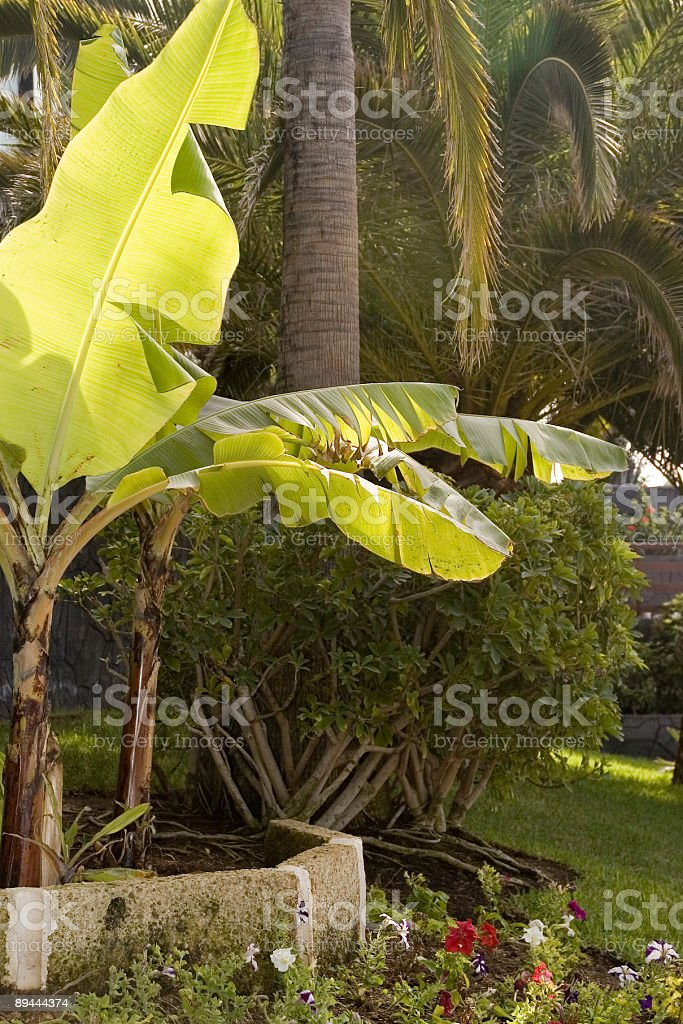 Tropical Palms, park royalty-free stock photo