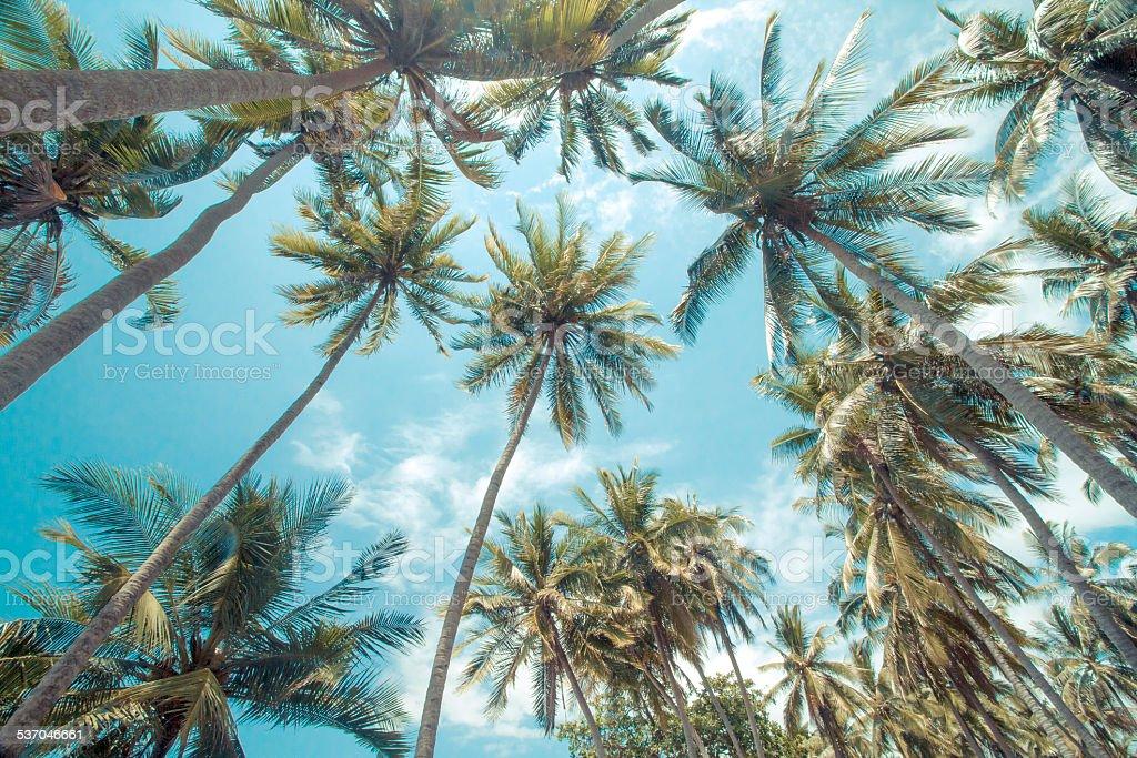 Tropical palms. stock photo
