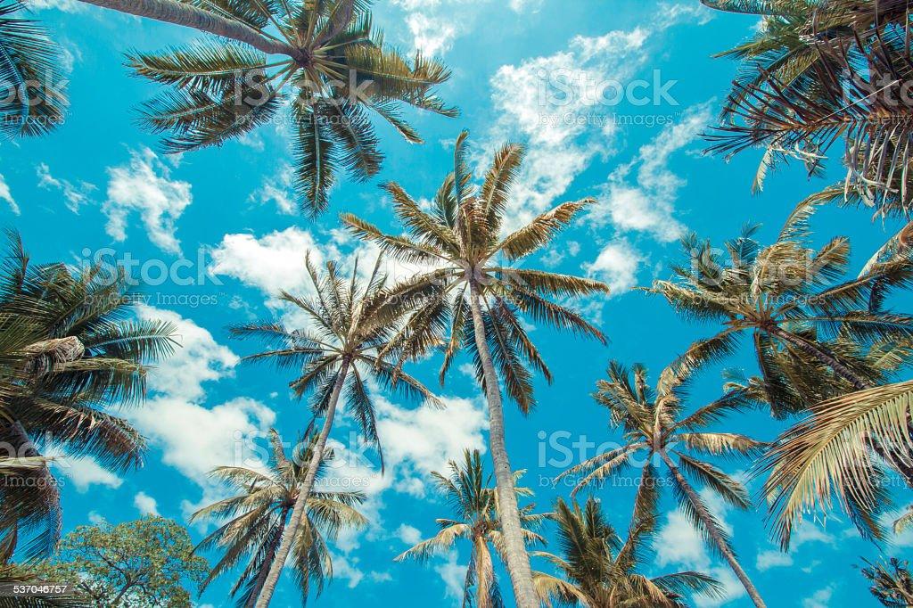 Tropikalnymi palmami. – zdjęcie