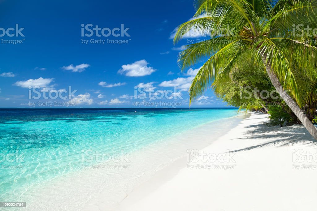 tropical paradise beach background stock photo