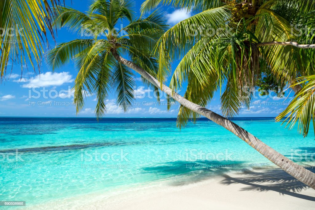 tropical paradise beach background - foto stock