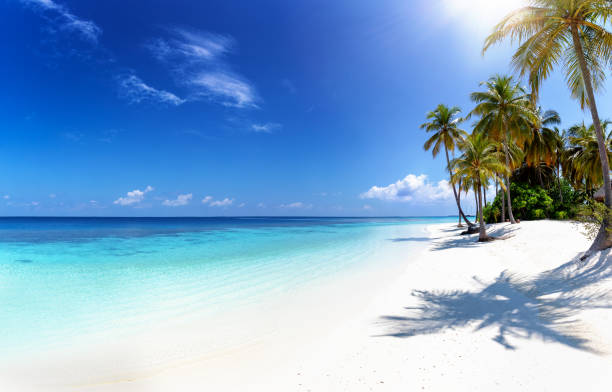 Tropical paradise beach Tropical paradise beach with coconut palm trees, turquoise ocean and deep, blue sky idyllic stock pictures, royalty-free photos & images