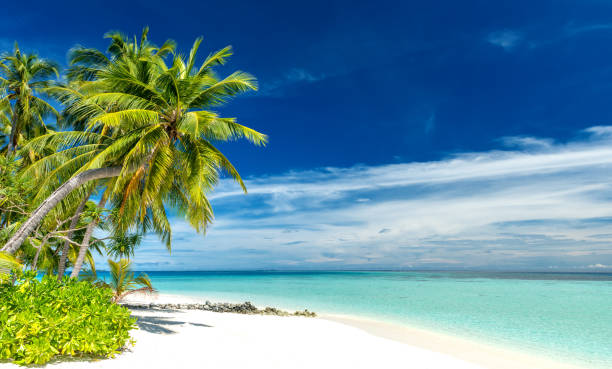 tropical paradise beach tropical paradise beach with white sand and coconut palm trees south pacific ocean stock pictures, royalty-free photos & images