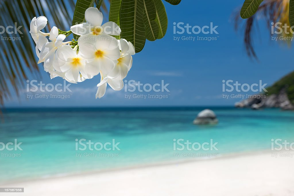 Tropical Paradise Beach (XXXL) stock photo