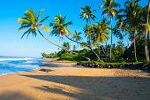 Untouched  sunny  tropical beach in  seashore of Sri Lanka