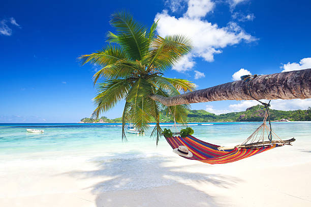 tropical paradise beach - hangmat stockfoto's en -beelden
