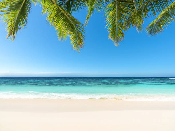 Tropical paradise beach stock photo