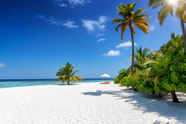 A tropical paradise beach with coconut palm trees, fine sand and turquoise sea, Maldives stock photo