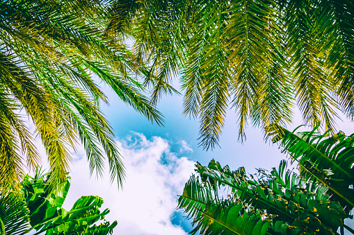 istock Tropical paradise below green palm trees 1128991563