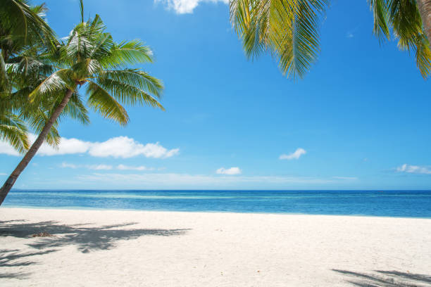 tropical paradise landscape - beach stock pictures, royalty-free photos & images