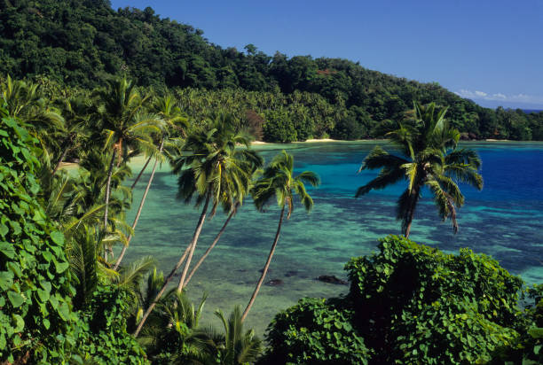 Tropical Paradies – Foto