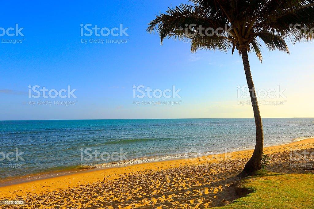 Tropical paradise:  Praia do Forte palm beach sunset, Bahia, Brazil stock photo