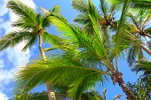 Tropical paradise relax, dramatic landscape, below coconut palm trees shadow
