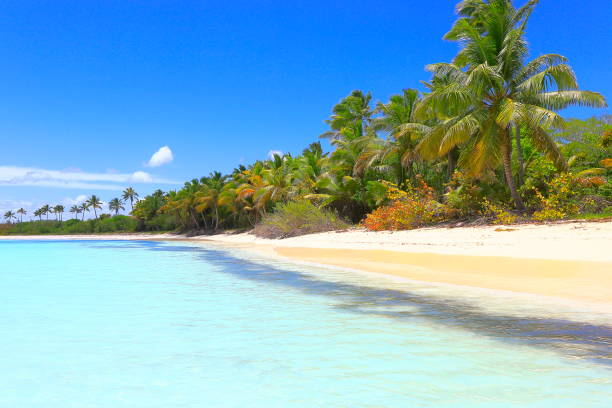tropical paradise: sandy deserted turquoise beach, saona island, punta cana – dominican republic - desert island stock photos and pictures