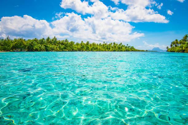 Tropical paradise seascape with palm tree island. Tahaa, French Polynesia. - foto stock