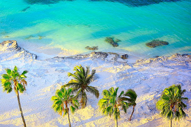 tropical paradise sunset: aerial sunny sandy caribbean palm trees beach - playa del carmen stock photos and pictures