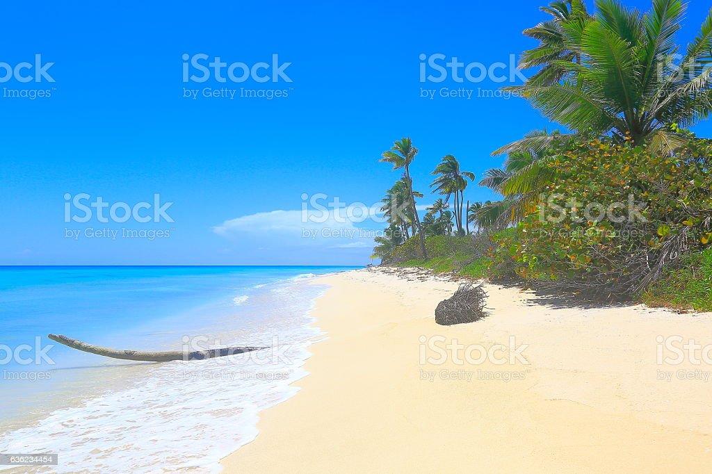 Tropical paradise: turquoise sand beach, palm trees foliage, blue sky stock photo