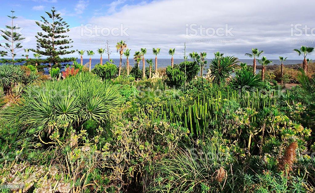 Tropical park, Tenerife stock photo