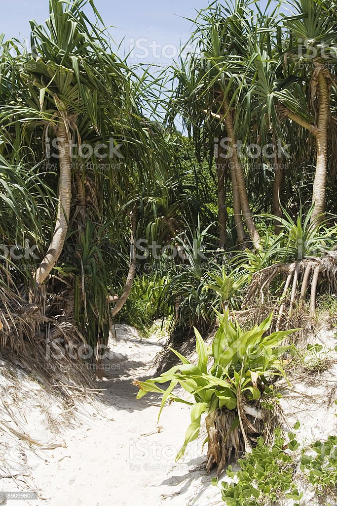 tropical path royalty-free stock photo