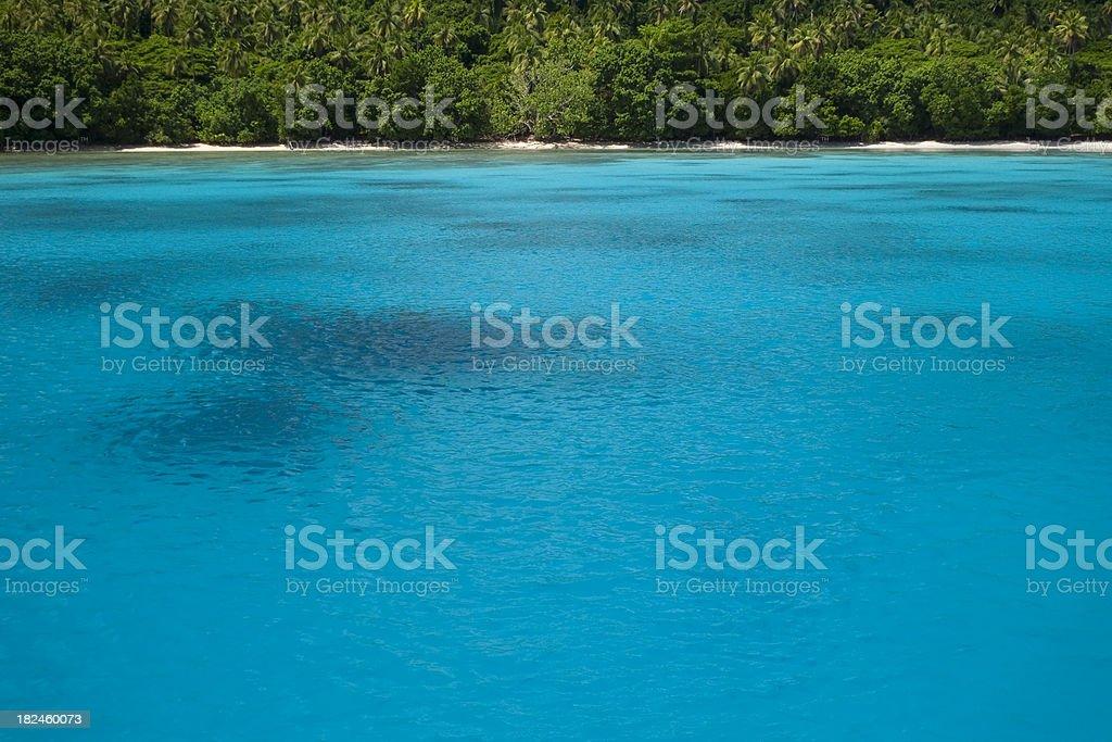 Tropical foto de stock libre de derechos