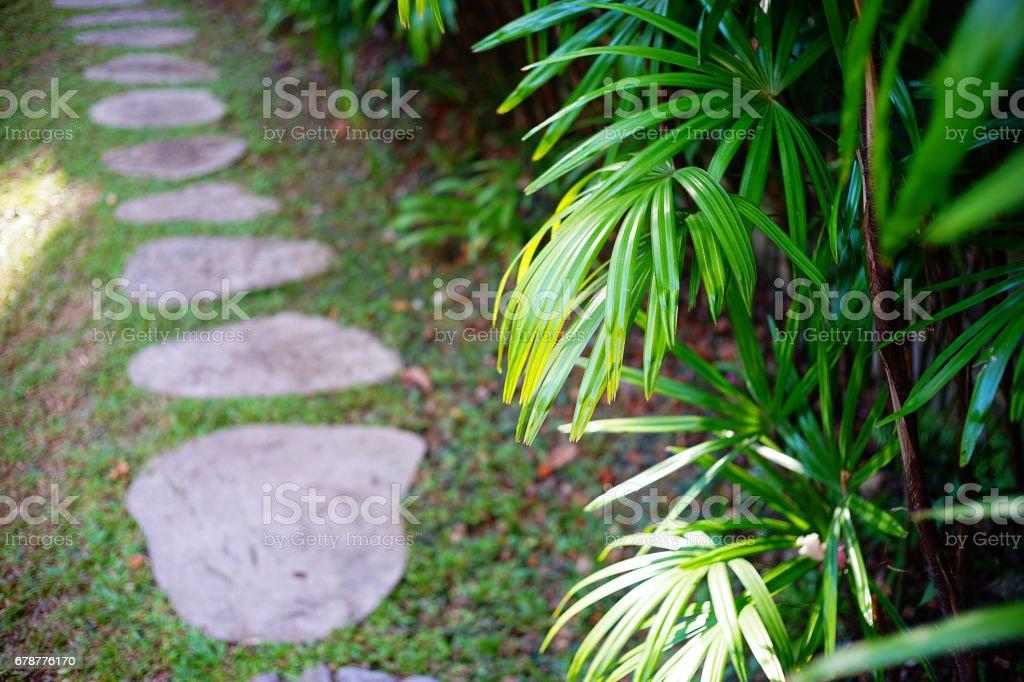 Tropikal royalty-free stock photo