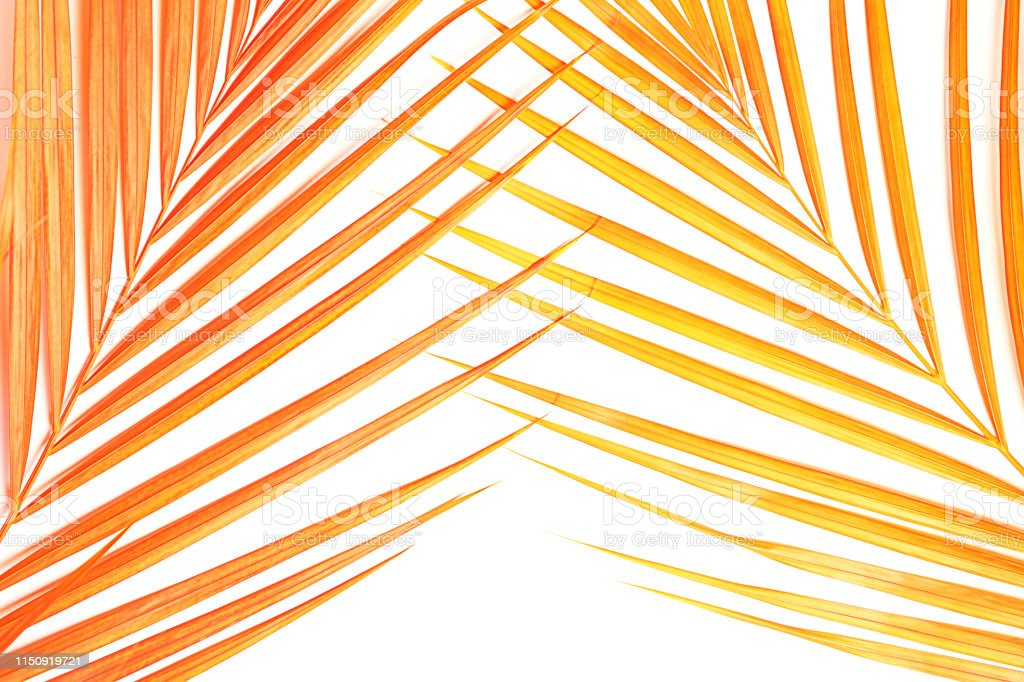 Tropical pink coral palm leaves on white background. Minimal nature...