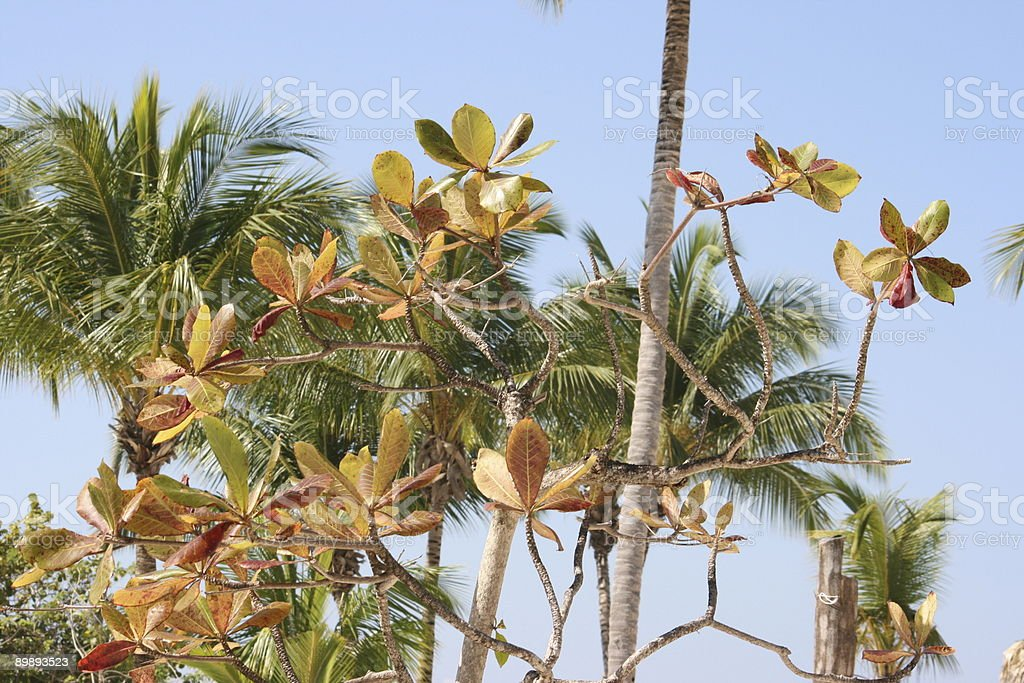 Tropical plant and palms royalty-free stock photo