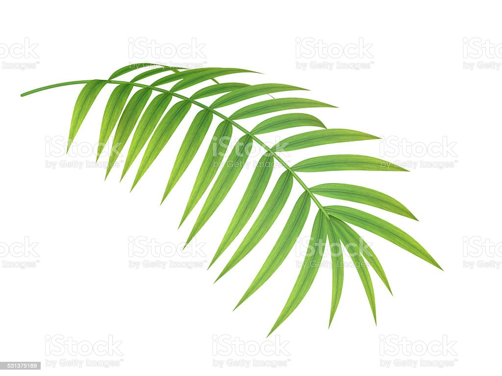 tropical plant branch stock photo