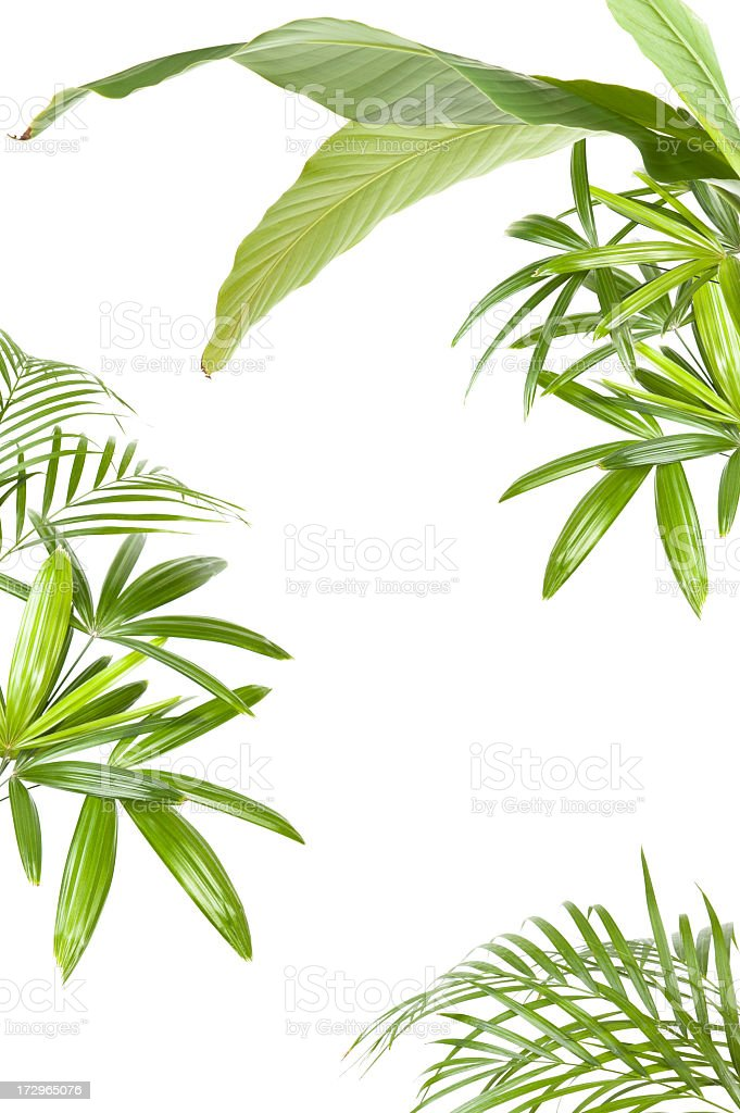 XXL Tropical plant frame stock photo