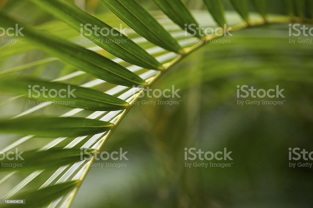 Tropical Plant Frond Abstract Background royalty-free stock photo
