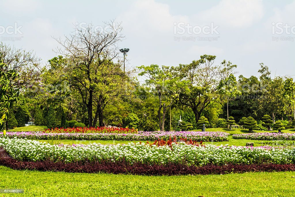 tropical plant garden  decorate in Thailand foto stock royalty-free