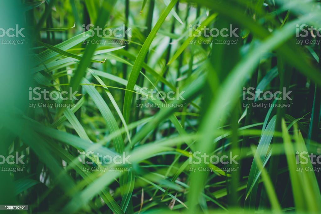 tropical plant leaves / inside rainforest,   jungle plants - stock photo