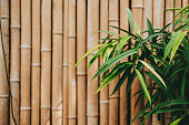 istock Tropical plant leaves on bamboo wall background with copy space. 1266634173