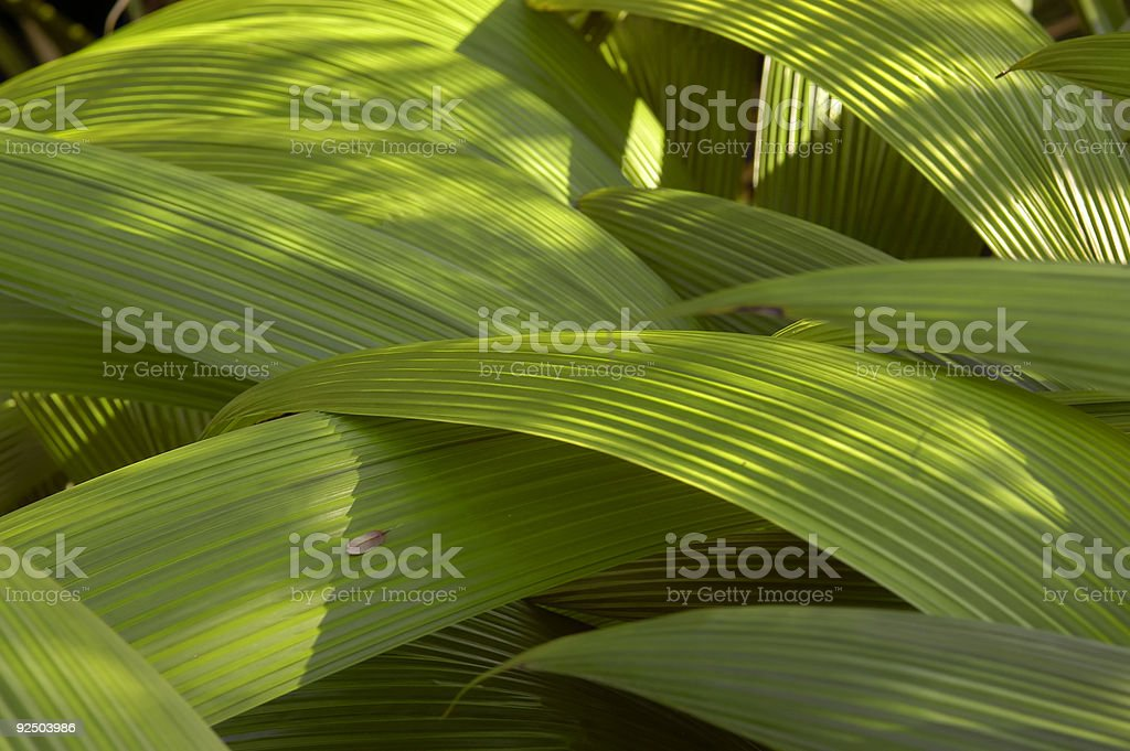 Tropical plant leaves royalty-free stock photo