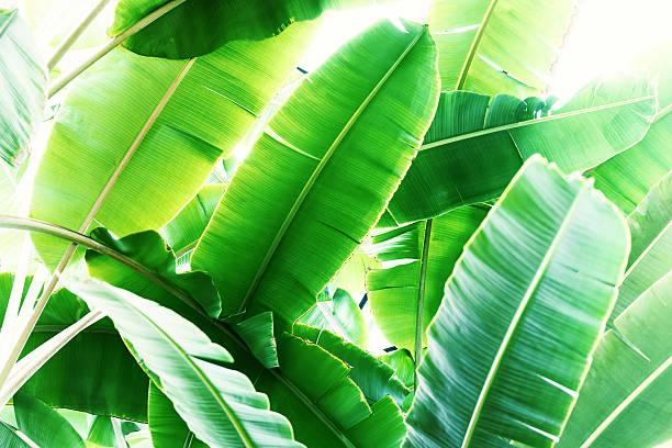 Tropical plant stock photo
