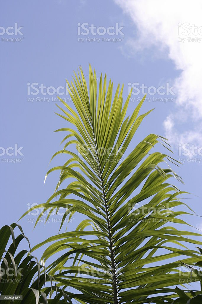 Tropical plant royalty-free stock photo