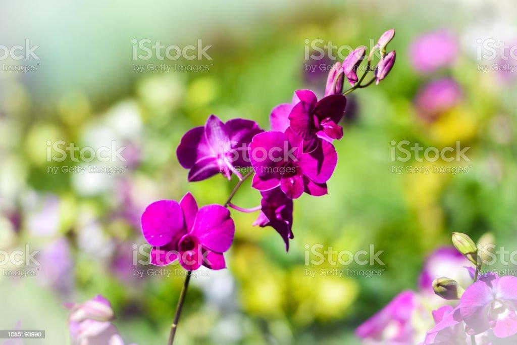 Photo libre de droit de Plante Tropicale Purple Orchid Fleur ...