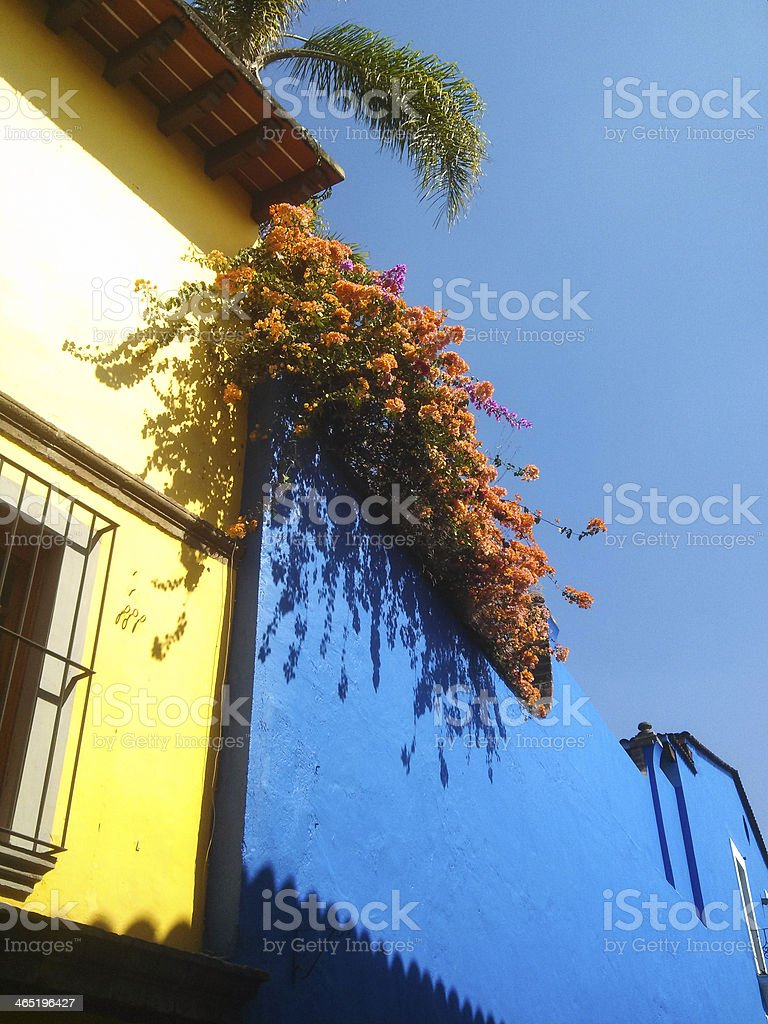Tropical Plants and Colorful Buildings Cuernavaca Mexico royalty-free stock photo