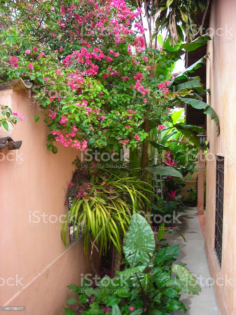 Tropical Plants And Flowers Climb Patio Wall Copan Honduras Stock ...