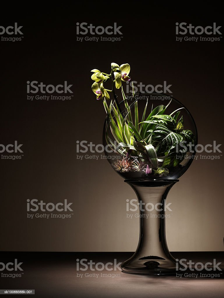 Tropical plants and orchid flower in  terrarium 免版稅 stock photo