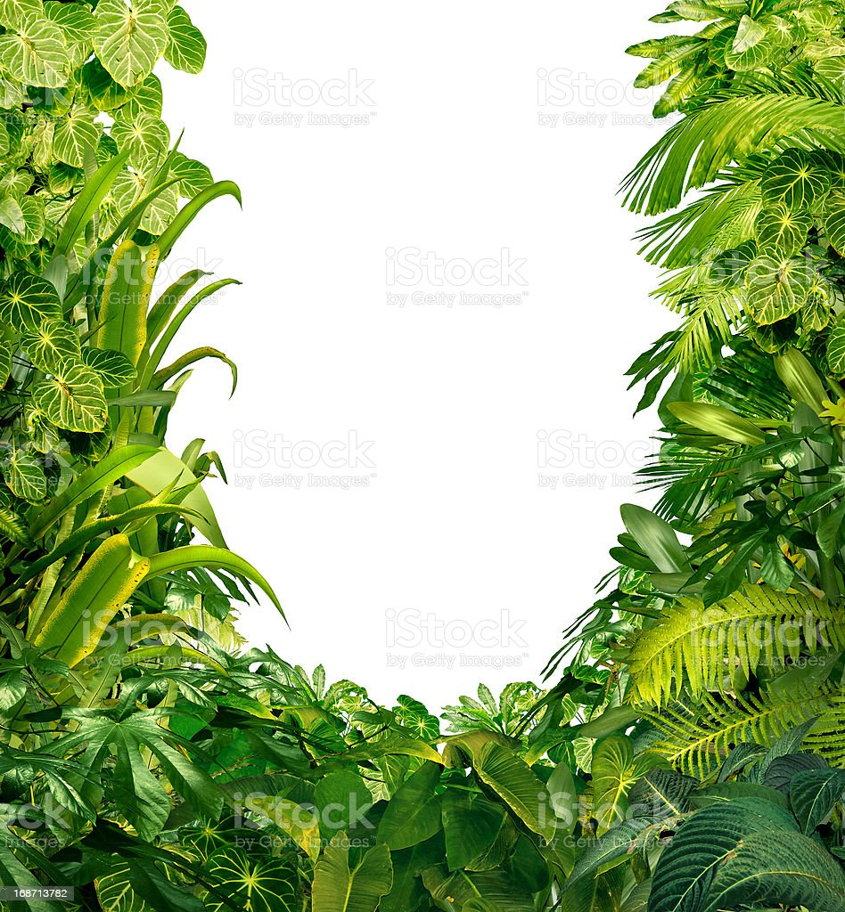 Tropical Plants Blank Frame stock photo