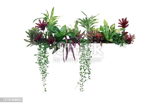 Tropical plants bush decor (hanging Dischidia, Bromeliad, Dracaena, Begonia, Bird