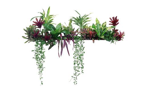 Tropical plants bush decor (hanging Dischidia, Bromeliad, Dracaena, Begonia, Bird\