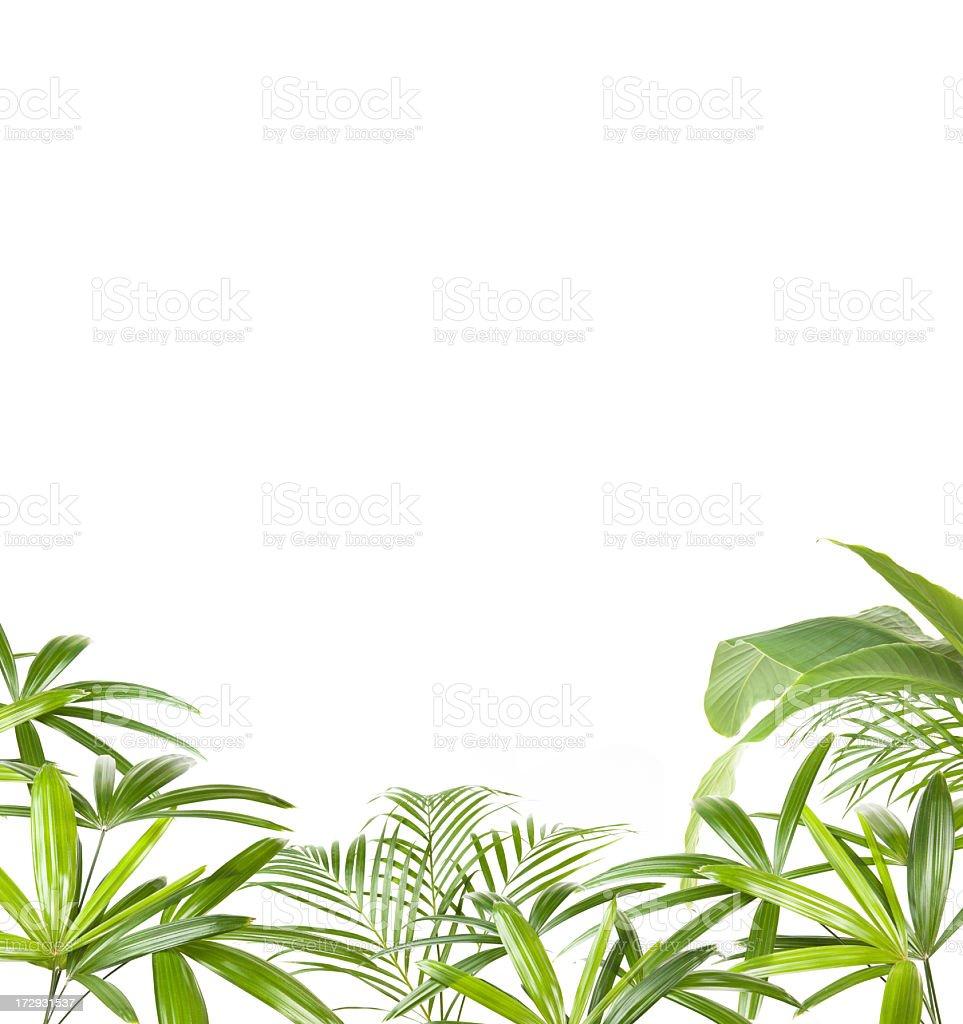 Tropical plants frame stock photo
