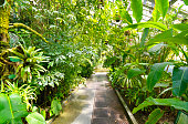 Tropical Plants in a greenhouse at botanic garden, Madrid, Spain.