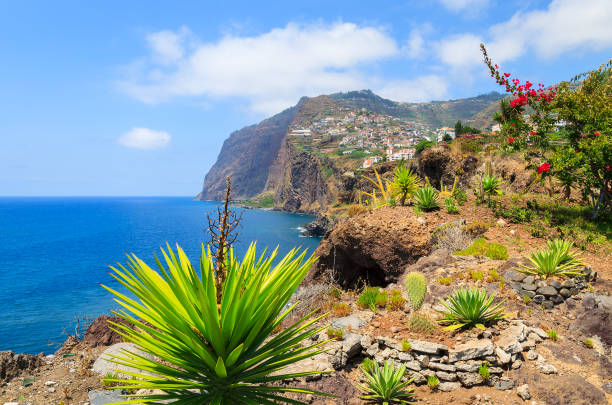 tropical plants on coast of madeira island in summer, portugal - ilha da madeira imagens e fotografias de stock